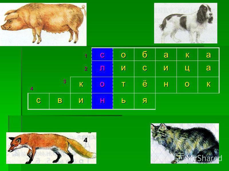 1 собака 2 лисица 34 котёнок свинья