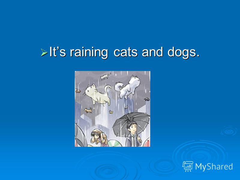 Its raining cats and dogs. Its raining cats and dogs.