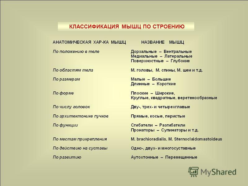 КЛАССИФИКАЦИЯ МЫШЦ ПО СТРОЕНИЮ