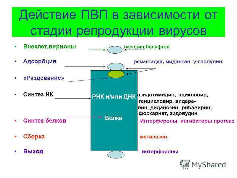 Действие ПВП в зависимости от стадии репродукции вирусов Внеклет.вирионы оксолин, бонафтон Адсорбция ремантадин, мидантан, γ-глобулин «Раздевание» Синтез НК азидотимидин, ацикловир, ганцикловир, ведара- бин, диданозин, рибавирин, фоскарнет, зидовудин