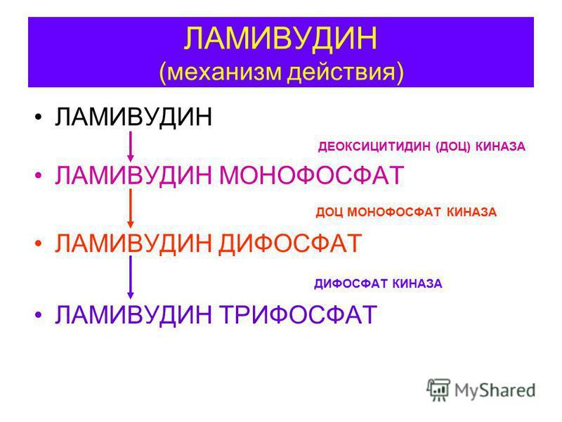 ЛАМИВУДИН (механизм действия) ЛАМИВУДИН ДЕОКСИЦИТИДИН (ДОЦ) КИНАЗА ЛАМИВУДИН МОНОФОСФАТ ДОЦ МОНОФОСФАТ КИНАЗА ЛАМИВУДИН ДИФОСФАТ ДИФОСФАТ КИНАЗА ЛАМИВУДИН ТРИФОСФАТ