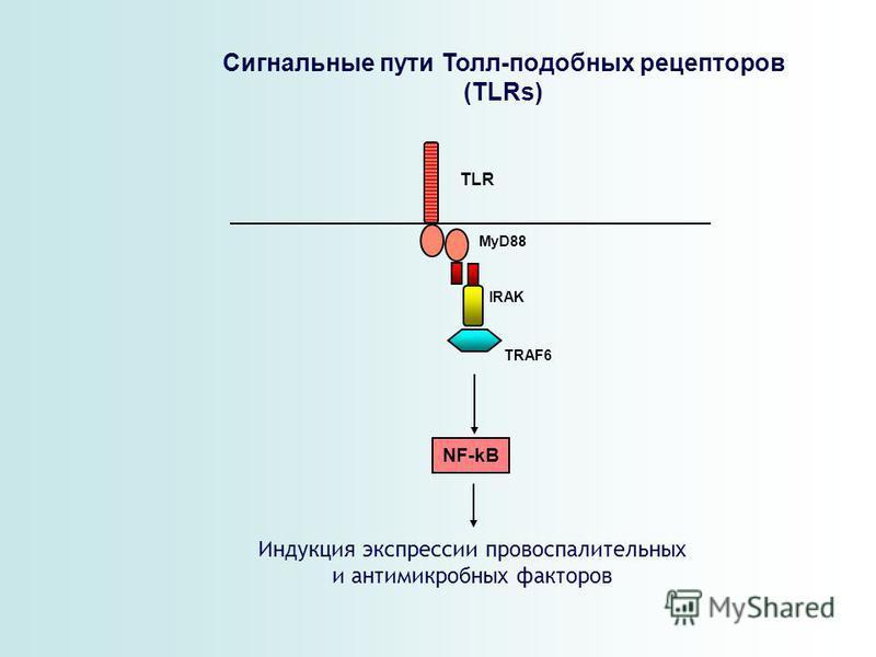MyD88 TLR NF-kB IRAK TRAF6 Сигнальные пути Толл-подобных рецепторов (TLRs) Индукция экспрессии провоспалительных и антимикробных факторов