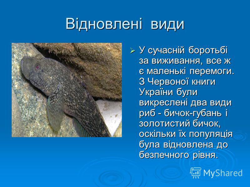 Відновлені види У сучасній боротьбі за виживання, все ж є маленькі перемоги. З Червоної книги України були викреслені два види риб - бичок-губань і золотистий бичок, оскільки їх популяція була відновлена до безпечного рівня. У сучасній боротьбі за ви