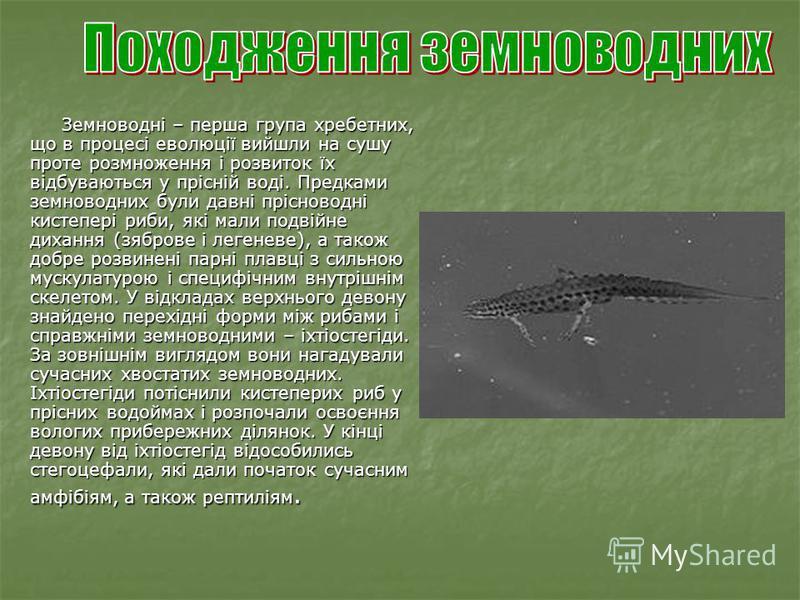 Земноводні – перша група хребетних, що в процесі еволюції вийшли на сушу проте розмноження і розвиток їх відбуваються у прісній воді. Предками земноводних були давні прісноводні кистепері риби, які мали подвійне дихання (зяброве і легеневе), а також
