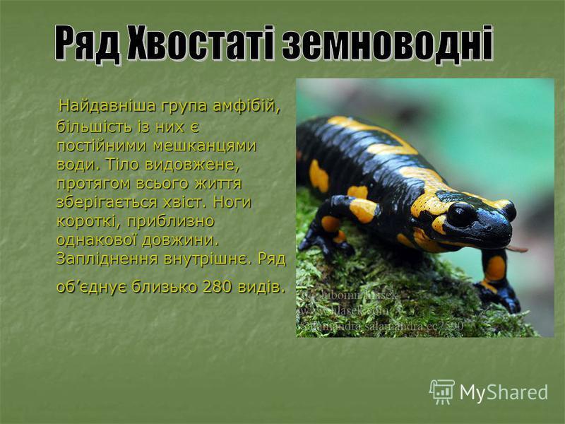 Найдавніша група амфібій, більшість із них є постійними мешканцями води. Тіло видовжене, протягом всього життя зберігається хвіст. Ноги короткі, приблизно однакової довжини. Запліднення внутрішнє. Ряд обєднує близько 280 видів. Найдавніша група амфіб