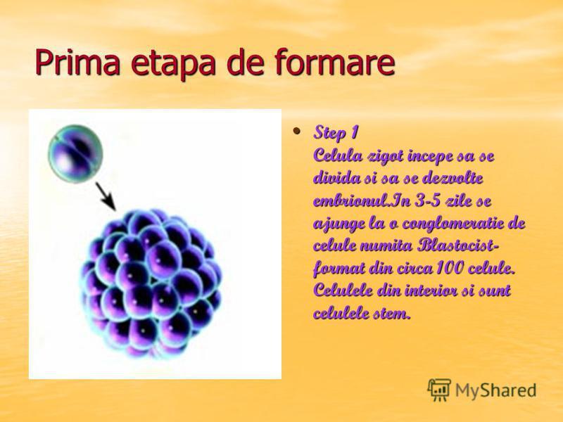 Prima etapa de formare Step 1 Celula zigot incepe sa se divida si sa se dezvolte embrionul.In 3-5 zile se ajunge la o conglomeratie de celule numita Blastocist- format din circa 100 celule. Celulele din interior si sunt celulele stem. Step 1 Celula z