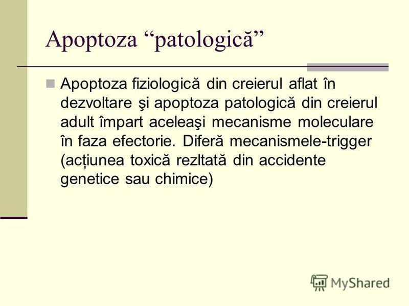 Apoptoza patologică Apoptoza fiziologică din creierul aflat în dezvoltare şi apoptoza patologică din creierul adult împart aceleaşi mecanisme moleculare în faza efectorie. Diferă mecanismele-trigger (acţiunea toxică rezltată din accidente genetice sa