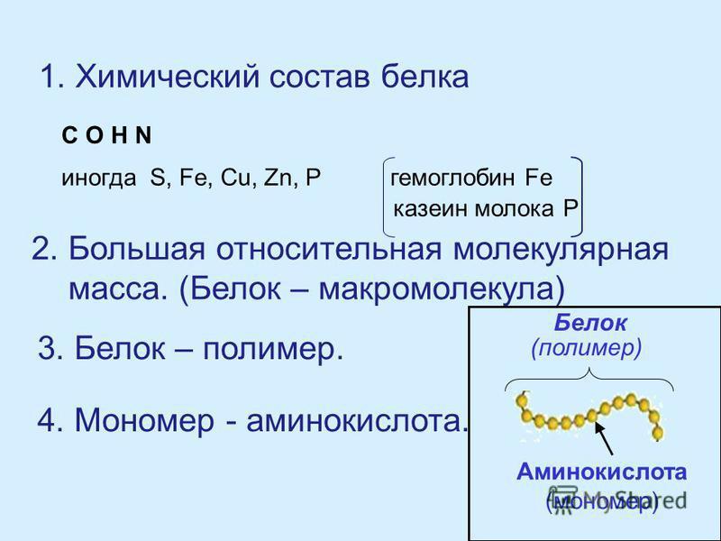 1. Химический состав белка C O H N иногда S, Fe, Cu, Zn, P гемоглобин Fe казеин молока Р 2. Большая относительная молекулярная масса. (Белок – макромолекула) 3. Белок – полимер. 4. Мономер - аминокислота. Белок (полимер) Аминокислота (мономер)