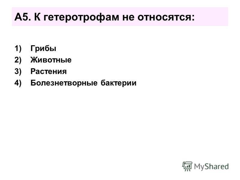 А5. К гетеротрофам не относятся: 1)Грибы 2)Животные 3)Растения 4)Болезнетворные бактерии