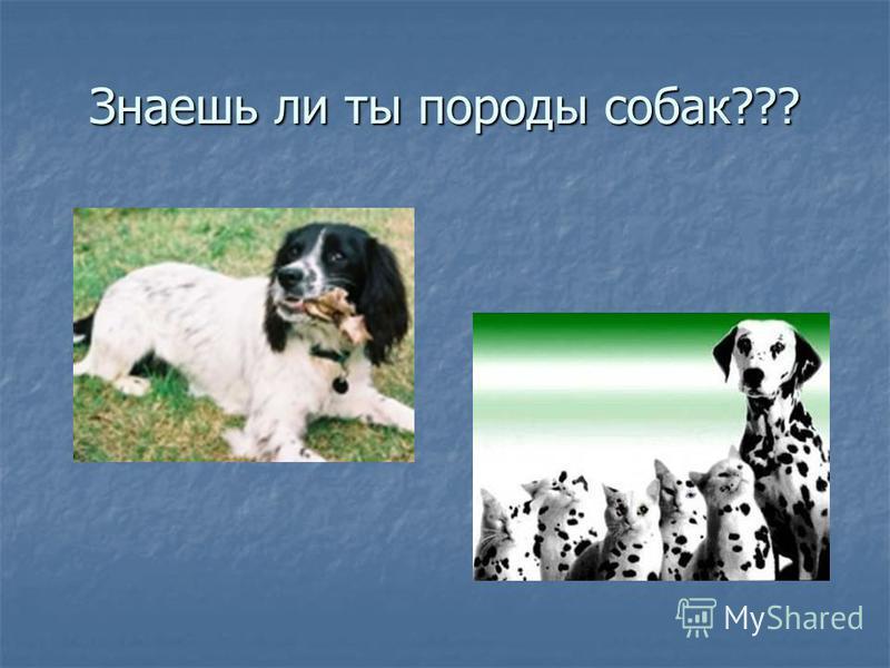 Знаешь ли ты породы собак???