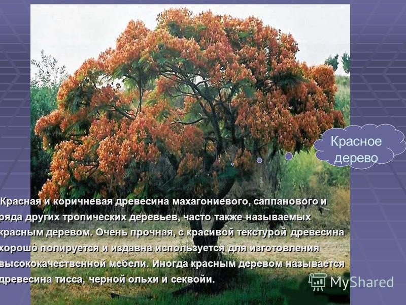 Красная и коричневая древесина махагониевого, сапа нового и ряда других тропических деревьев, часто также называемых красным деревом. Очень прочная, с красивой текстурой древесина хорошо полируется и издавна используется для изготовления высококачест