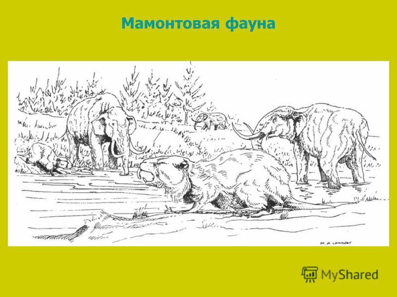 Мамонтовая фауна