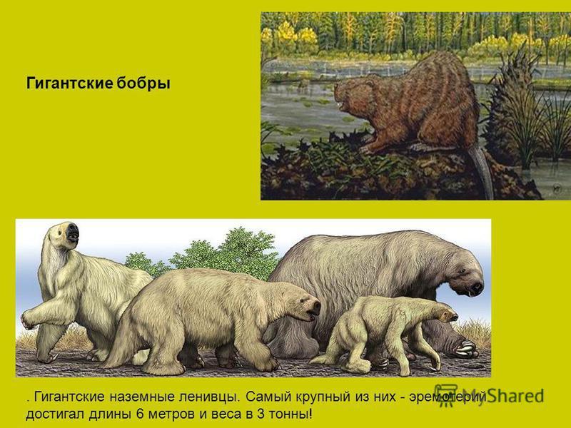 Гигантские бобры. Гигантские наземные ленивцы. Самый крупный из них - эремотерий достигал длины 6 метров и веса в 3 тонны!
