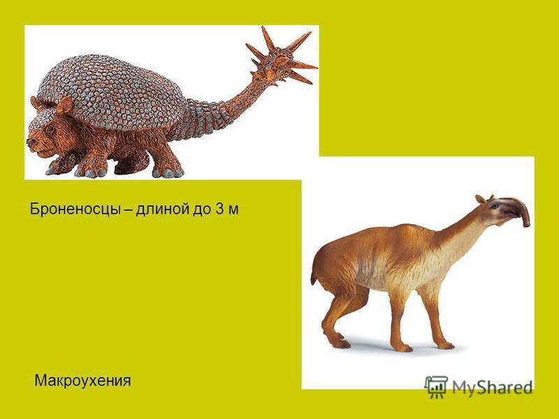 Броненосцы – длиной до 3 м Макроухения