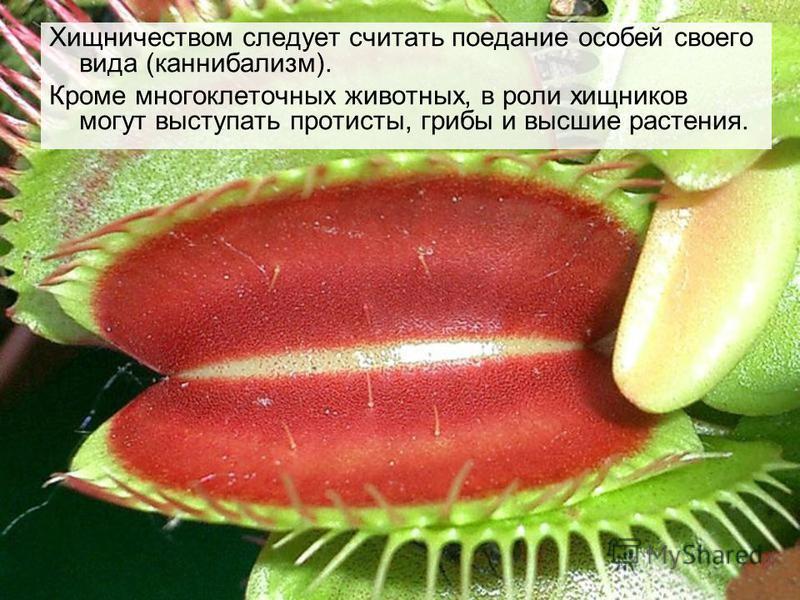 Хищничеством следует считать поедание особей своего вида (каннибализм). Кроме многоклеточных животных, в роли хищников могут выступать протисты, грибы и высшие растения.
