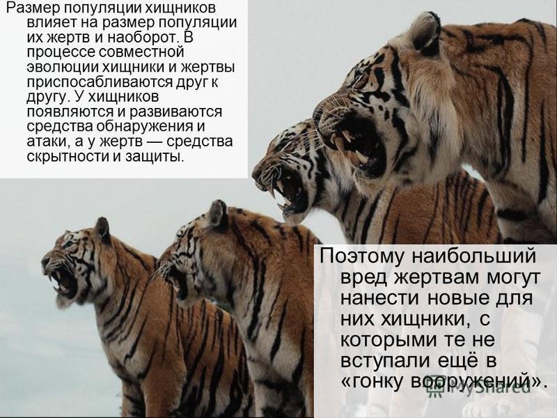 Размер популяции хищников влияет на размер популяции их жертв и наоборот. В процессе совместной эволюции хищники и жертвы приспосабливаются друг к другу. У хищников появляются и развиваются средства обнаружения и атаки, а у жертв средства скрытности