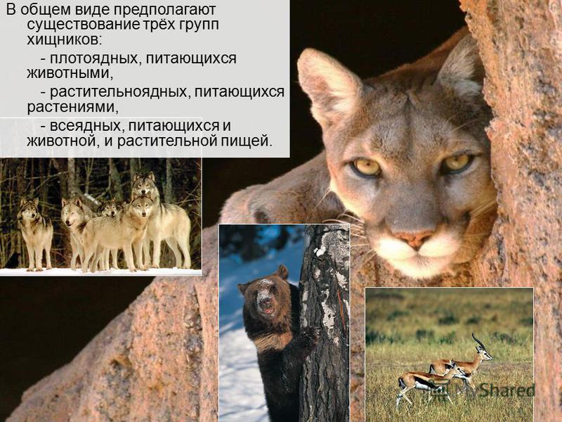 В общем виде предполагают существование трёх групп хищников: - плотоядных, питающихся животными, - растительноядных, питающихся растениями, - всеядных, питающихся и животной, и растительной пищей.