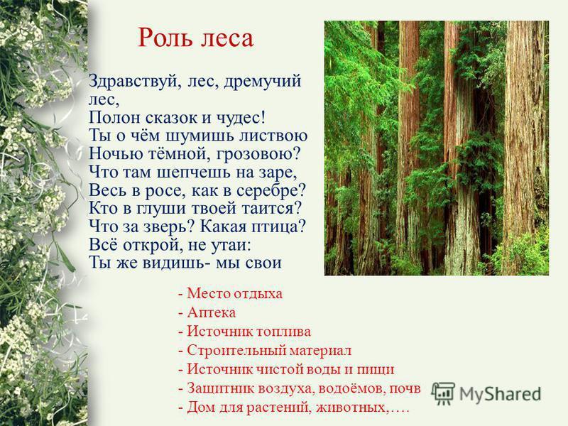 Здравствуй, лес, дремучий лес, Полон сказок и чудес! Ты о чём шумишь листвою Ночью тёмной, грозовою? Что там шепчешь на заре, Весь в росе, как в серебре? Кто в глуши твоей таится? Что за зверь? Какая птица? Всё открой, не утаи: Ты же видишь- мы свои