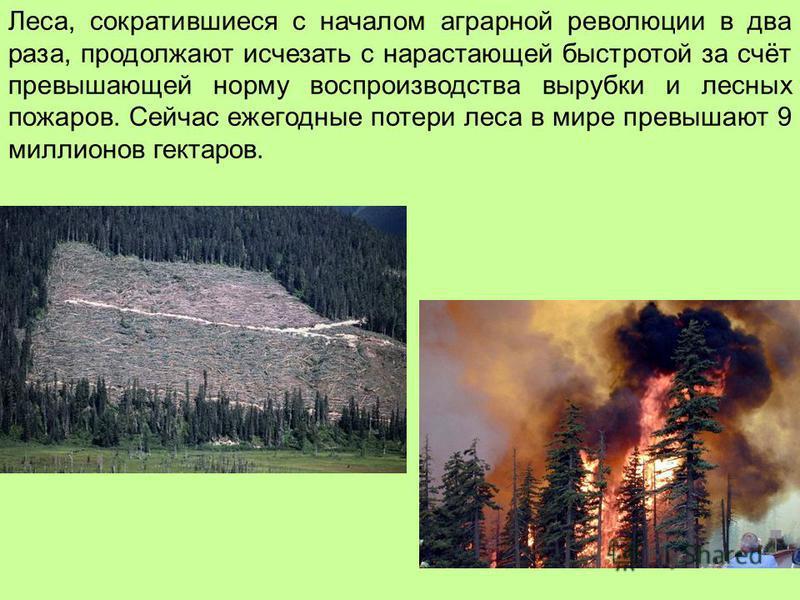 Леса, сократившиеся с началом аграрной революции в два раза, продолжают исчезать с нарастающей быстротой за счёт превышающей норму воспроизводства вырубки и лесных пожаров. Сейчас ежегодные потери леса в мире превышают 9 миллионов гектаров.