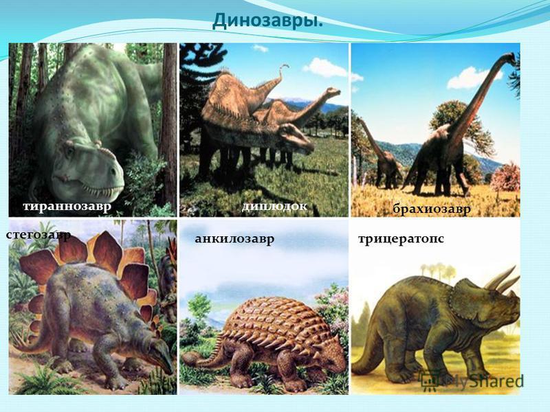 Динозавры. брахиозавр диплодок тираннозавр стегозавр анкилозавр трицератопс