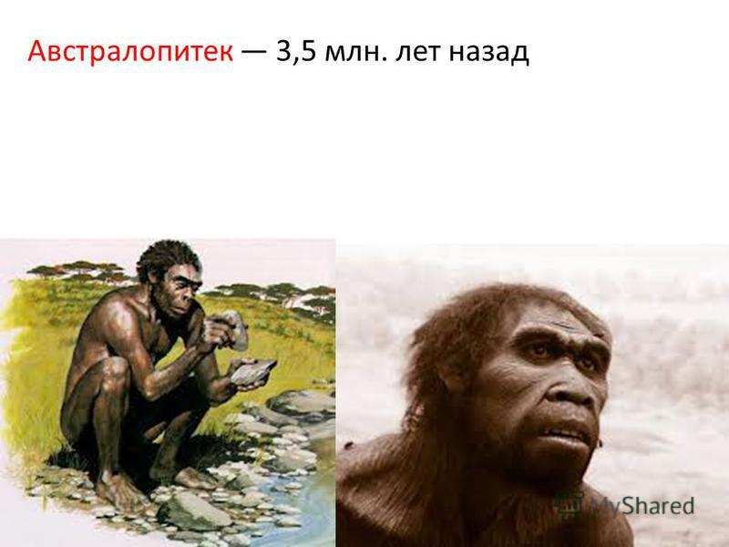 Австралопитек 3,5 млн. лет назад