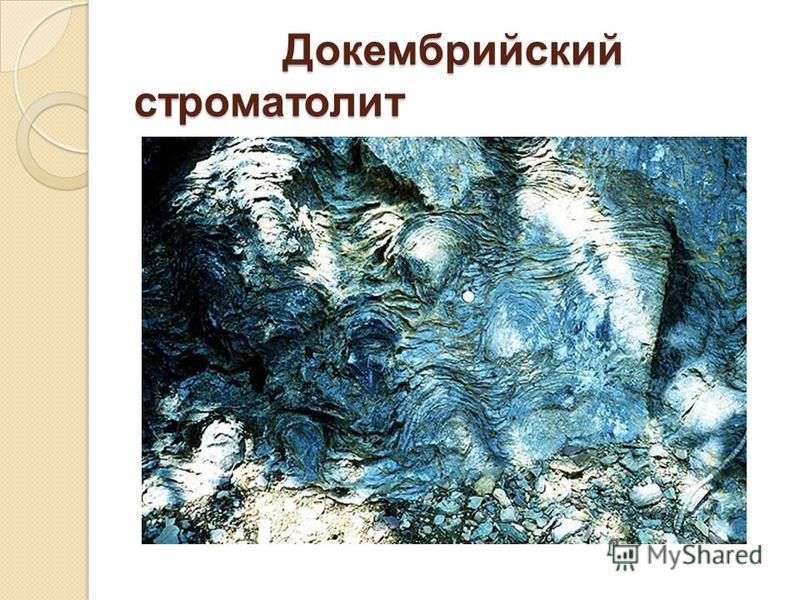 Докембрийский строматолит