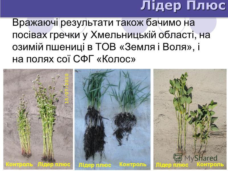 Вражаючі результати також бачимо на посівах гречки у Хмельницькій області, на озимій пшениці в ТОВ «Земля і Воля», і на полях сої СФГ «Колос» Лідер Плюс Контроль Лідер плюсКонтроль Лідер плюс