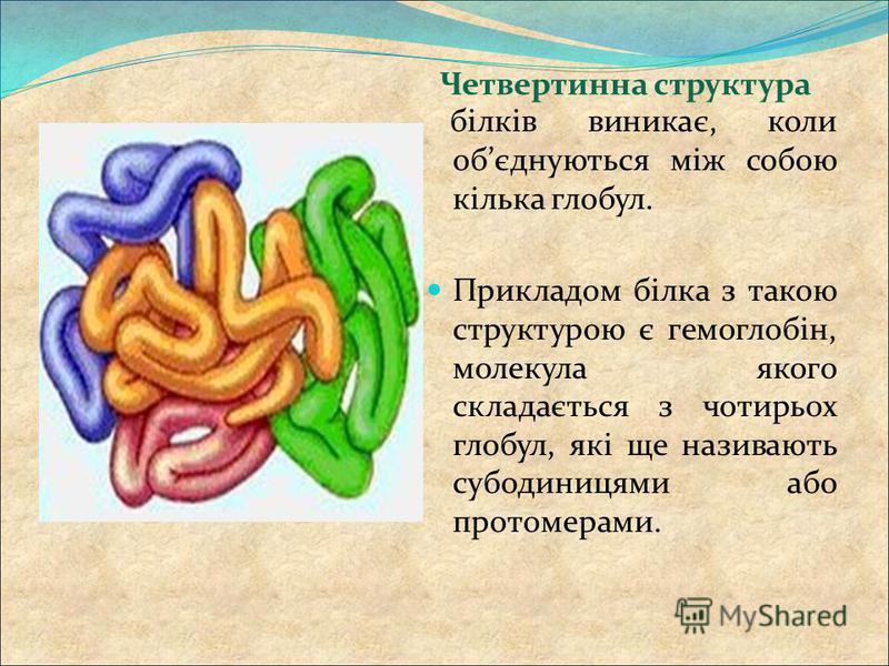 білків виникає, коли обєднуються між собою кілька глобул. Прикладом білка з такою структурою є гемоглобін, молекула якого складається з чотирьох глобул, які ще називають субодиницями або протомерами. Четвертинна структура