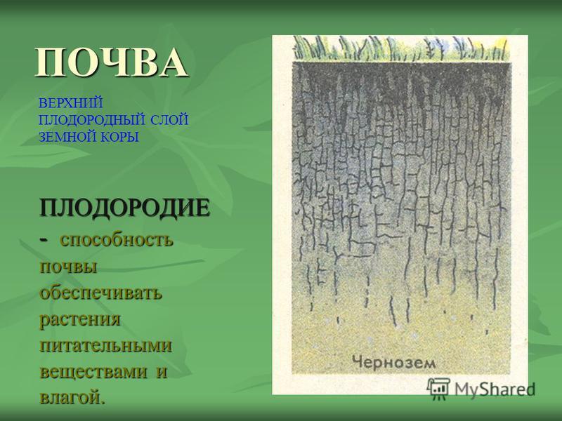 ПОЧВА ПЛОДОРОДИЕ - способность почвы обеспечивать растения питательными веществами и влагой. ВЕРХНИЙ ПЛОДОРОДНЫЙ СЛОЙ ЗЕМНОЙ КОРЫ