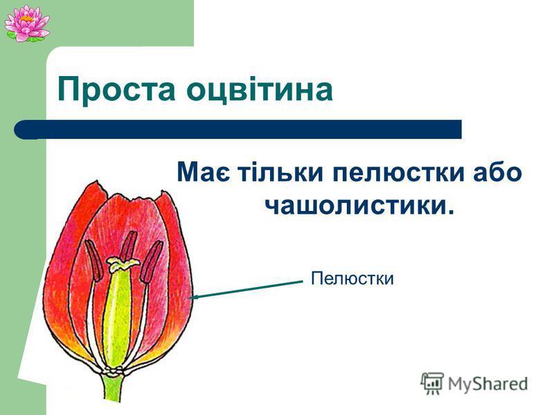 Подвійна оцвітина