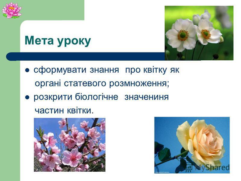Квітка Орган статевого розмноження рослин