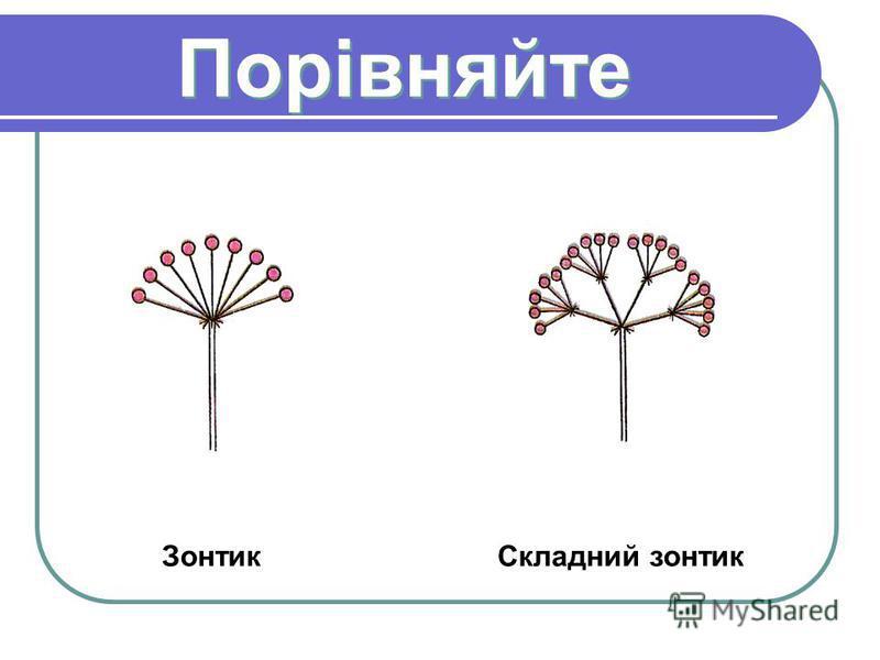 Порівняйте Зонтик Складний зонтик
