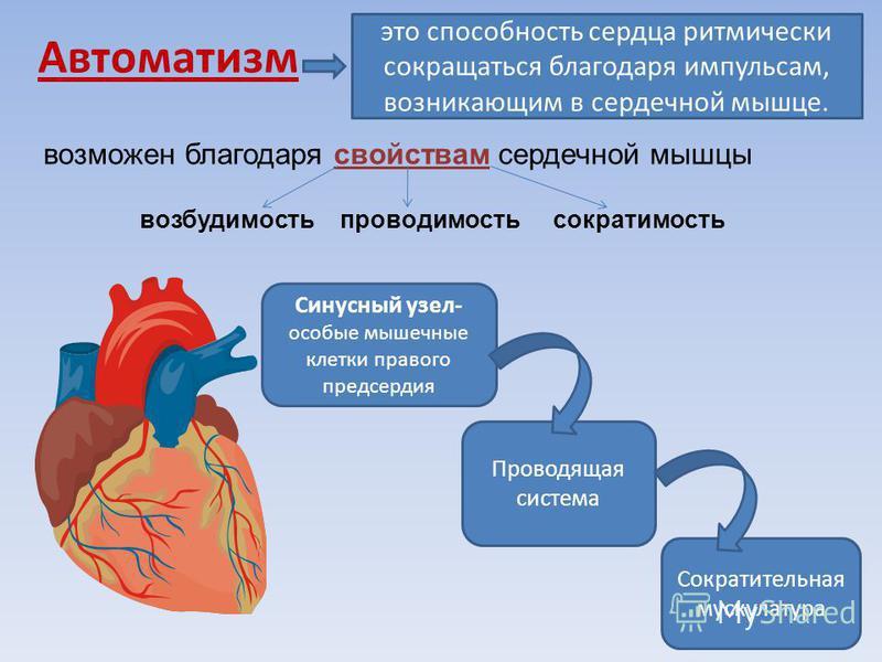 2. Опыт оживления изолированного сердца человека впервые в мире был успешно проведён русским учёным Кулябко А. А. в 1902 г. – оживил сердце ребёнка спустя 20 ч после смерти. 1.300 лет назад анатом А.Визалий вскрывал труп, чтобы установить причину сме