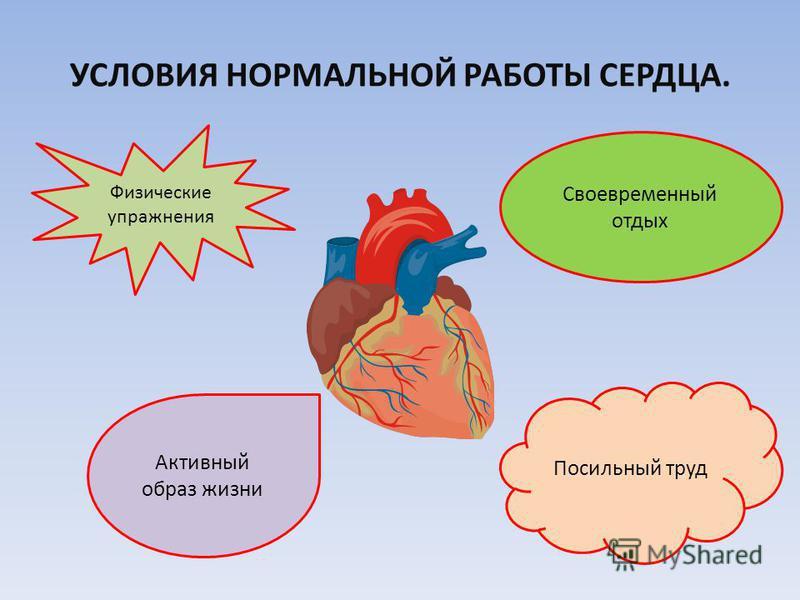 Факторы, негативно влияющие на сердце ГИПОДИНАМИЯ НИКОТИН СТРЕССОВЫЕ СИТУАЦИИ АЛКОГОЛЬ НЕПРАВИЛЬНОЕ ПИТАНИЕ ПАТОГЕННЫЕ МИКРОБЫ