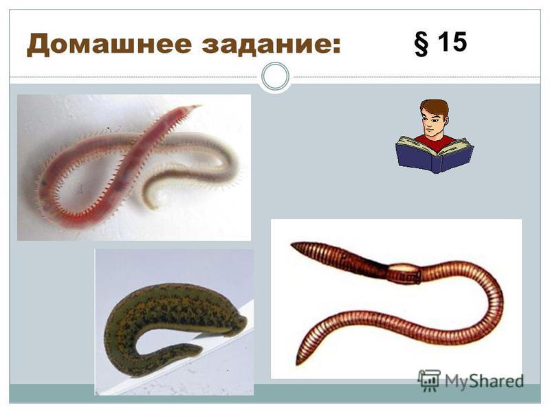 Домашнее задание: § 15