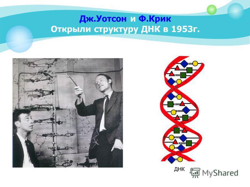 Дж.Уотсон и Ф.Крик Открыли структуру ДНК в 1953 г.