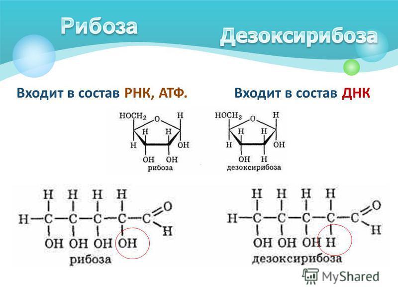 Входит в состав РНК, АТФ. Входит в состав ДНК