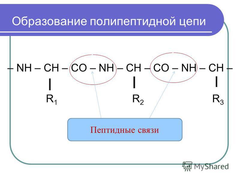 – NH – CH – CO – NH – CH – CO – NH – CH – R 1 R 2 R 3 Пептидные связи Образование полипептидной цепи
