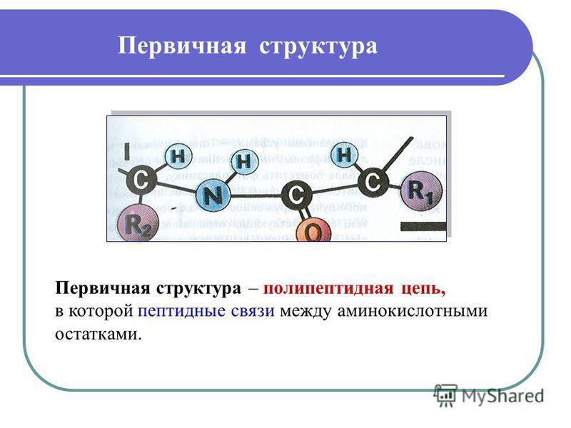 Первичная структура Первичная структура – полипептидная цепь, в которой пептидные связи между аминокислотными остатками.
