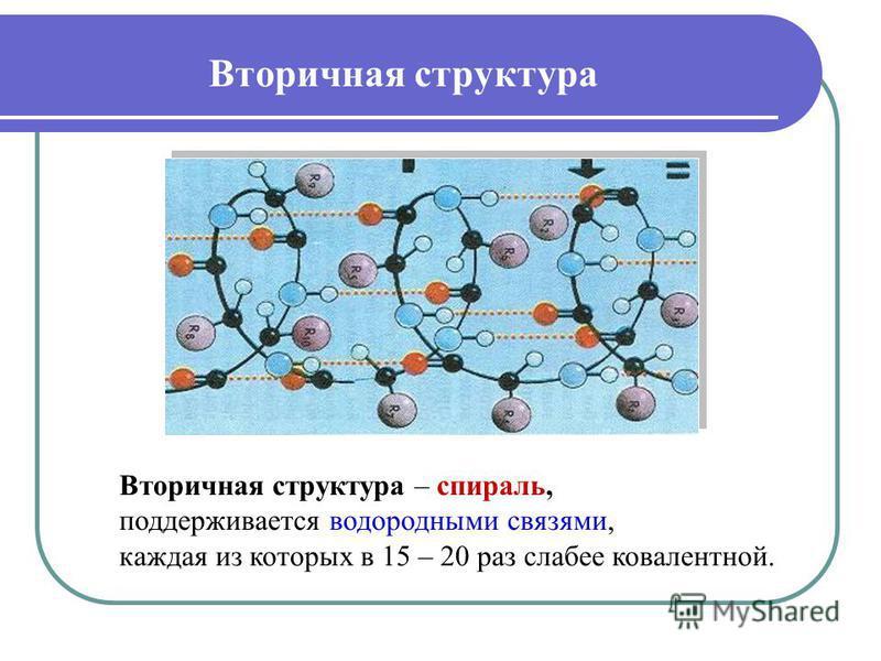 Вторичная структура – спираль, поддерживается водородными связями, каждая из которых в 15 – 20 раз слабее ковалентной. Вторичная структура