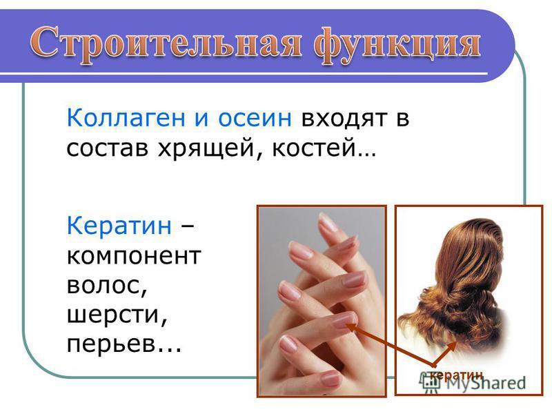 Коллаген и осени входят в состав хрящей, костей… Кератин – компонент волос, шерсти, перьев... кератин