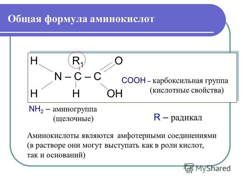 Общая формула аминокислот H R 1 O N – C – C H H OH H R 1 O N – C – C H H OH Аминокислоты являются амфотерными соединениями (в растворе они могут выступать как в роли кислот, так и оснований) NH 2 – аминогруппа (щелочные) COOH – карбоксильная группа (