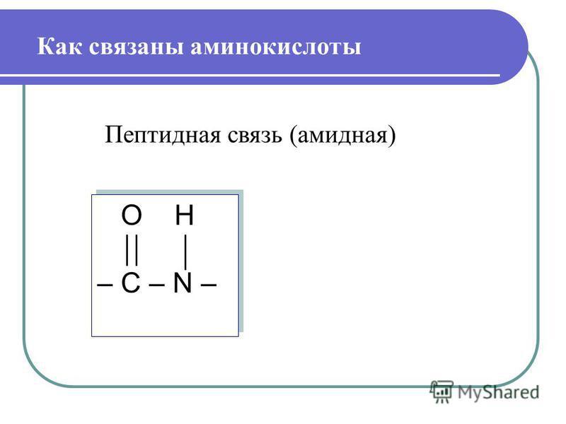 O H – С – N – O H – С – N – Как связаны аминокислоты Пептидная связь (амидная)