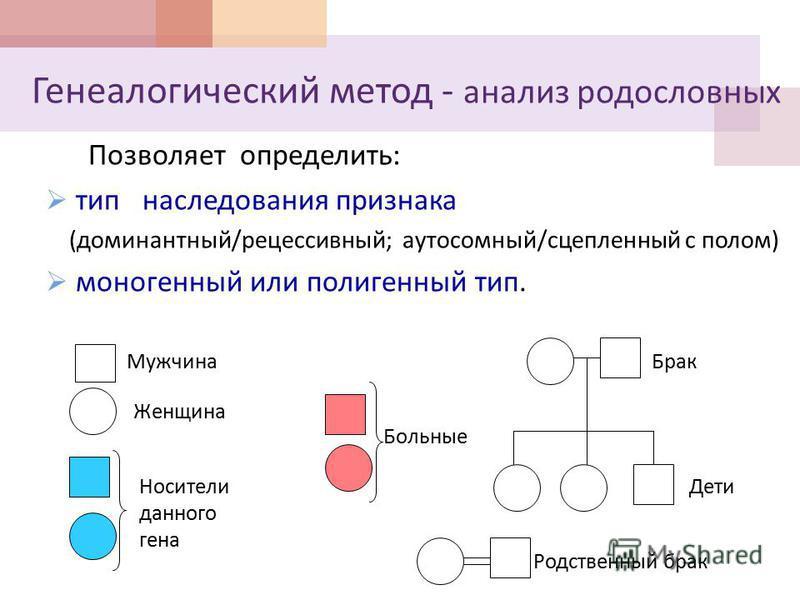 Генеалогический метод - анализ родословных Позволяет определить : тип наследования признака ( доминантный / рецессивный ; аутосомный / сцепленный с полом ) моногенный или полигенный тип. Мужчина Женщина Брак Дети Носители данного гена Больные Родстве