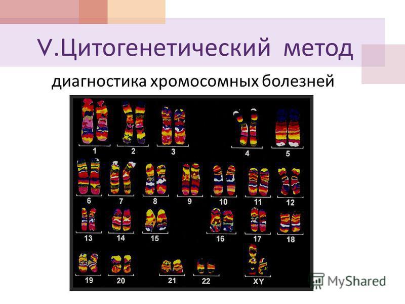 V. Цитогенетический метод диагностика хромосомных болезней