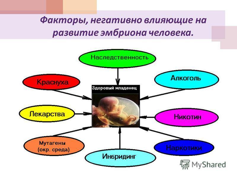 Факторы, негативно влияющие на развитие эмбриона человека.