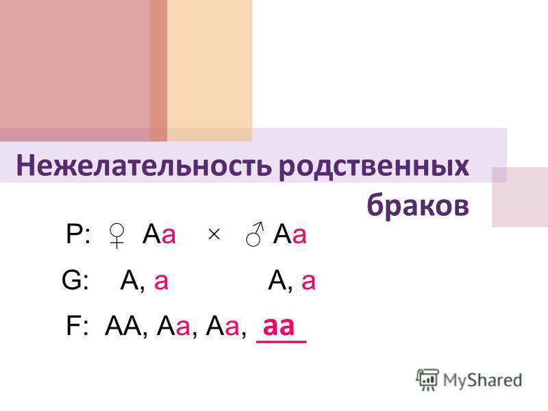 Нежелательность родственных браков P: Аа × Аа аа G: А, а А, а F: АА, Аа, Аа,
