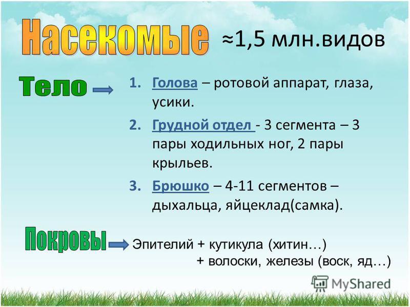 Автор учитель биологии и географии Славянской оош I-III ст.1 Леонтьева В.А.