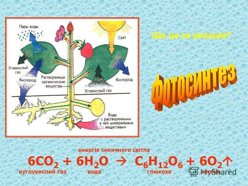 Що це за реакція? енергія сонячного світла 6СО 2 + 6Н 2 О С 6 Н 12 О 6 + 6О 2 вуглукислий газ вода глюкоза кисень