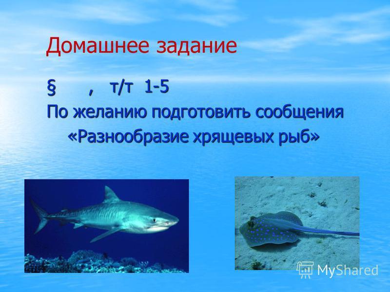Домашнее задание §, т/т 1-5 §, т/т 1-5 По желанию подготовить сообщения По желанию подготовить сообщения «Разнообразие хрящевых рыб» «Разнообразие хрящевых рыб»